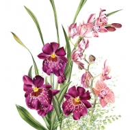 Miltoniopsis, Phalaenopsis, Cymbidium and Adiantum sp.